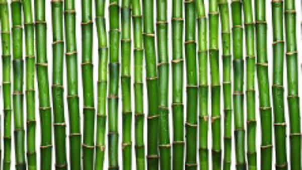 Franquicia Bambú Inversiones